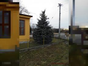 Vánoční stromek<br>